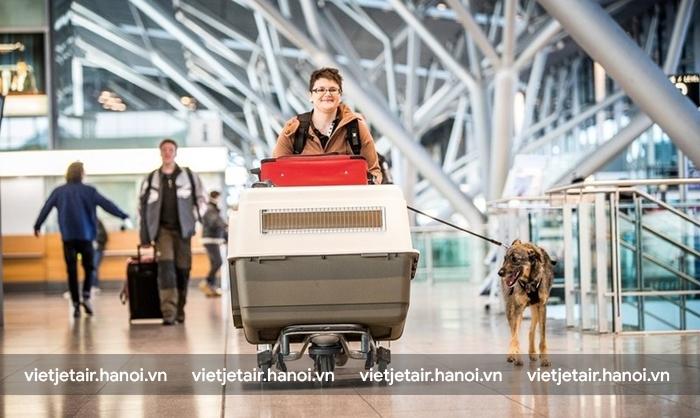 Đeo vào người thú cưng một chiếc xích để đảm bảo chúng vẫn theo chân bạn khi xuống máy bay.