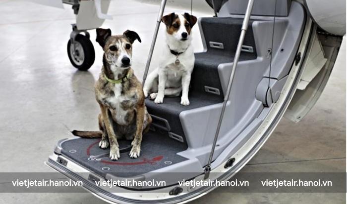 Quy định vận chuyển vật nuôi khi đi máy bay Vietjet